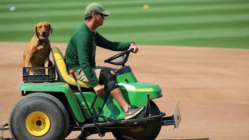How A's groundskeeper keeps field pristine with Raiders in Las Vegas