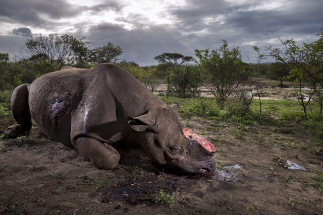 Image of rhino with horn hacked off wins Wildlife Photographer of the Year award
