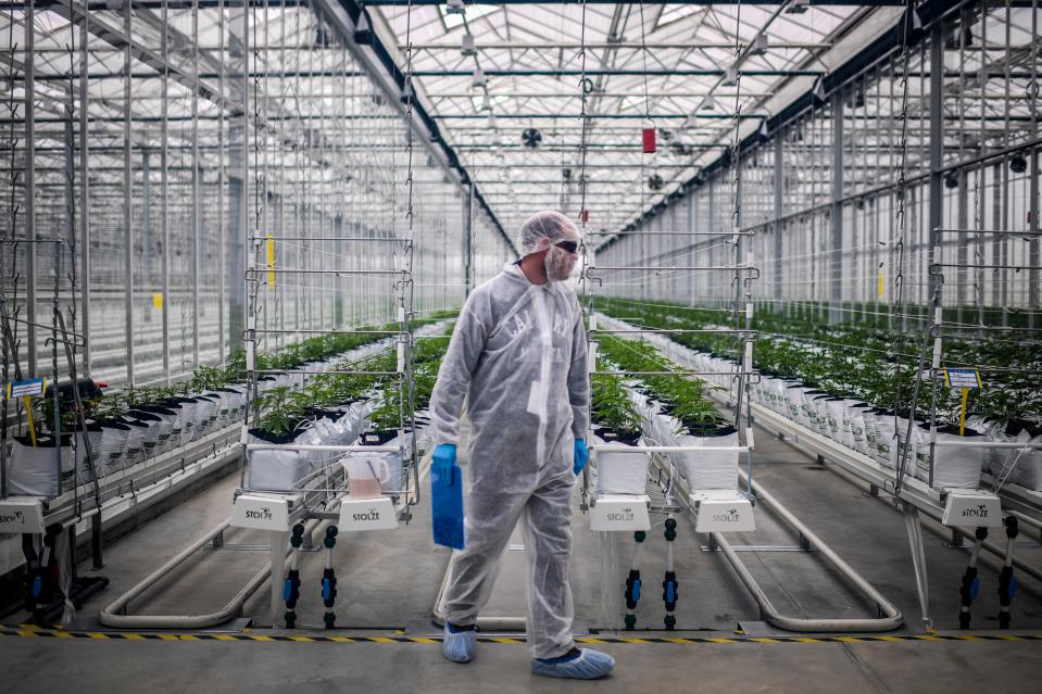 The delay by Tilray follows a resounding victory for Aphria shareholders who support the deal.. (Photo by PATRICIA DE MELO MOREIRA / AFP)