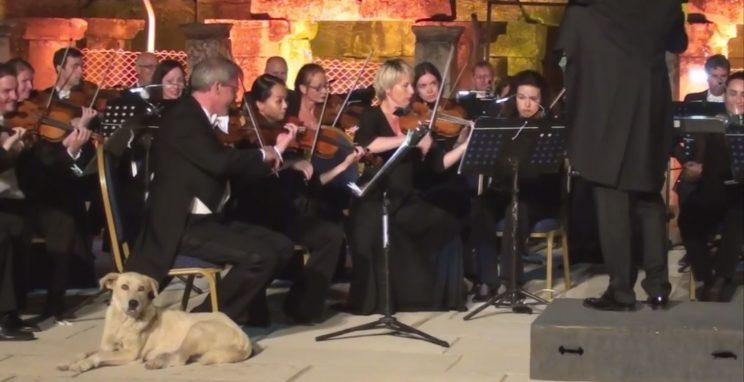 The orchestra concert that i had essay