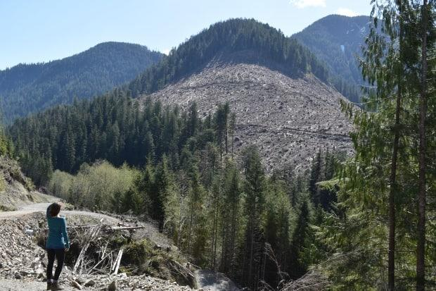 Old-growth cutblocks in the Caycuse Valley in October, 2020.