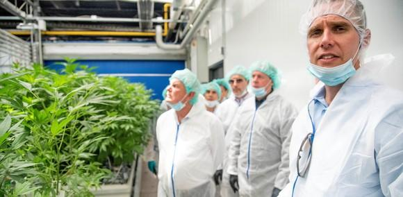 A group of white coats and medical masks in front of a cannabis plant center.