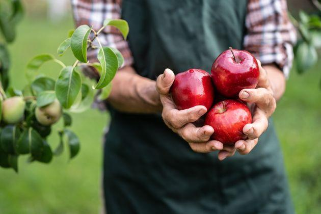 Mature farmer holding red apples (Photo: valentinrussanov via Getty Images)