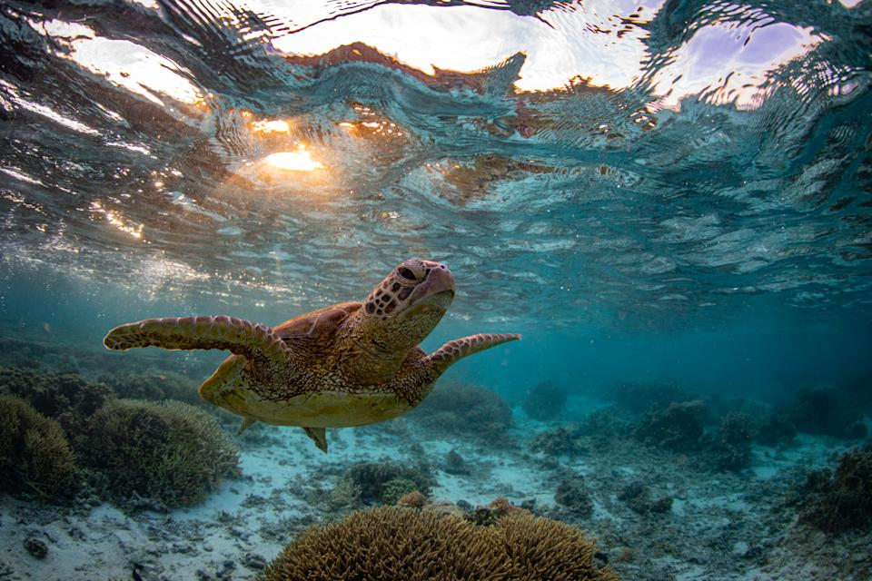 World Heritage sites like the Great Barrier Reef are under increased threat, according to some environment groups. Source: Getty