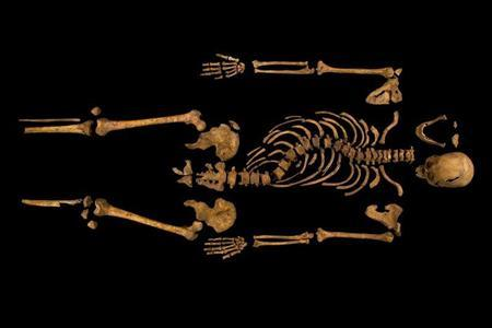 The skeleton of Richard III, which was discovered at the Grey Friars excavation site in Leicester, central England, is seen in this photograph provided by the University of Leicester and received in London on February 4, 2013. REUTERS/University of Leicester