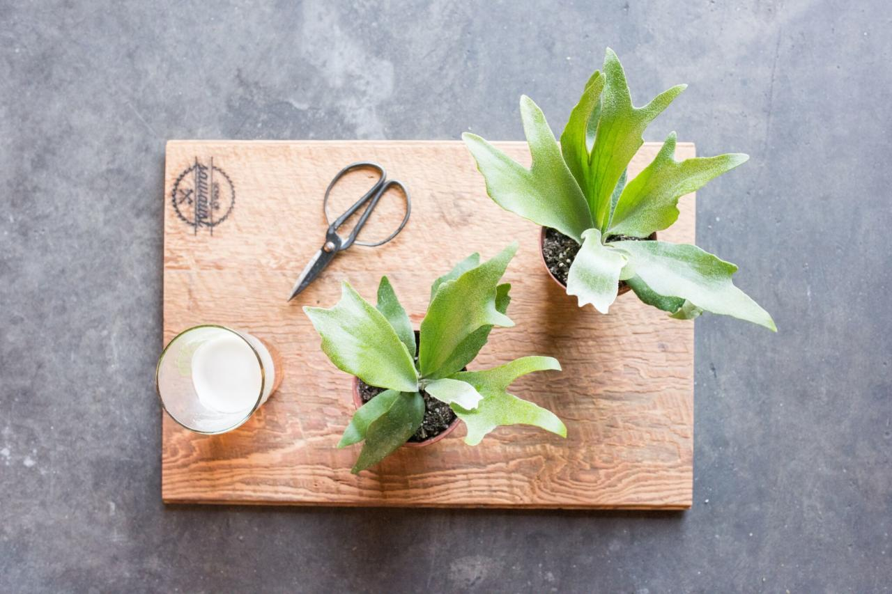 """<p>When the opportunity came up to collaborate with <a rel=""""nofollow"""" href=""""http://southboundbrewingco.com"""">Southbound Brewery</a>, the staghorn fern felt like the perfect plant to bring into a brewery. It's simple and somewhat masculine in look. We called up our friends at <a rel=""""nofollow"""" href=""""http://sonsofsawdust.com"""">Sons of Sawdust</a>, and they brought us some amazing wood. Beer + Staghorn Fern + Beautiful Wood = A good time had by everyone!</p>"""