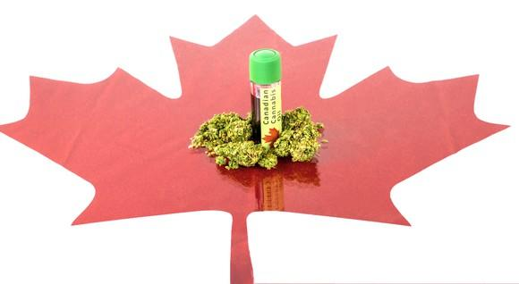 Cannabis buds and oil on top of image of red Canadian maple leaf