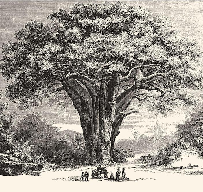 This illustration of people sitting at the base of a baobab tree evokes thoughts of an African griot sharing oral histories with young charges. USA TODAY's new Never Been Told project aims to share lost and hidden stories of people of color that might be retold in such a way.