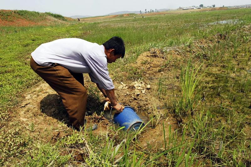 In this May 25, 2012 photo, a North Korean farmer gathers water as he tries to irrigate a field at the Tokhae cooperative farm on the outskirts of Nampho, North Korea. North Korea is reporting a serious drought that could worsen already critical food shortages, but help is unlikely to come from the United States and South Korea following Pyongyang's widely criticized rocket launch. (AP Photo/Kim Kwang Hyon)