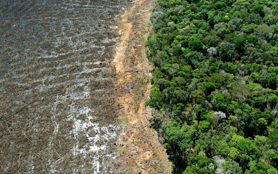 A deforested area close to Sinop, Mato Grosso State, photographed in August 2020 - FLORIAN PLAUCHEUR/AFP