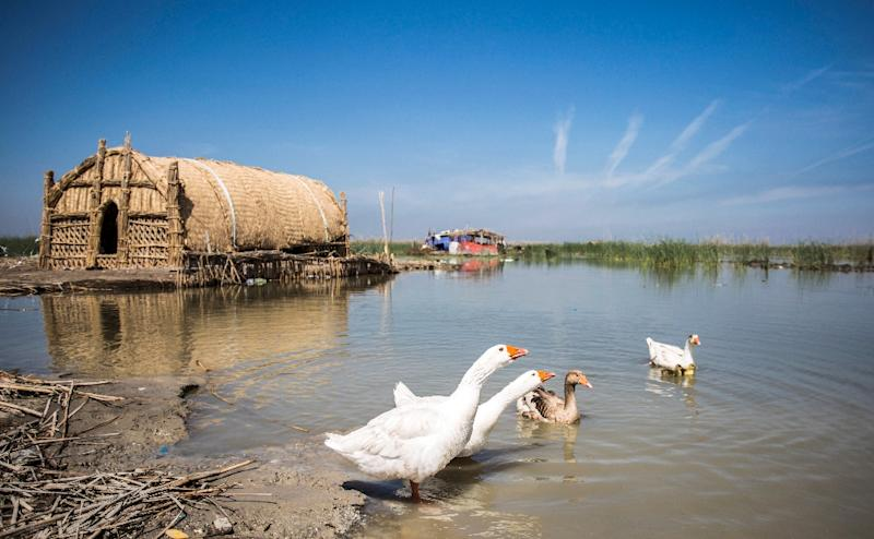Iraq's southern marshes are blossoming again, thanks to a wave of ecotourists (AFP Photo/Hussein FALEH)