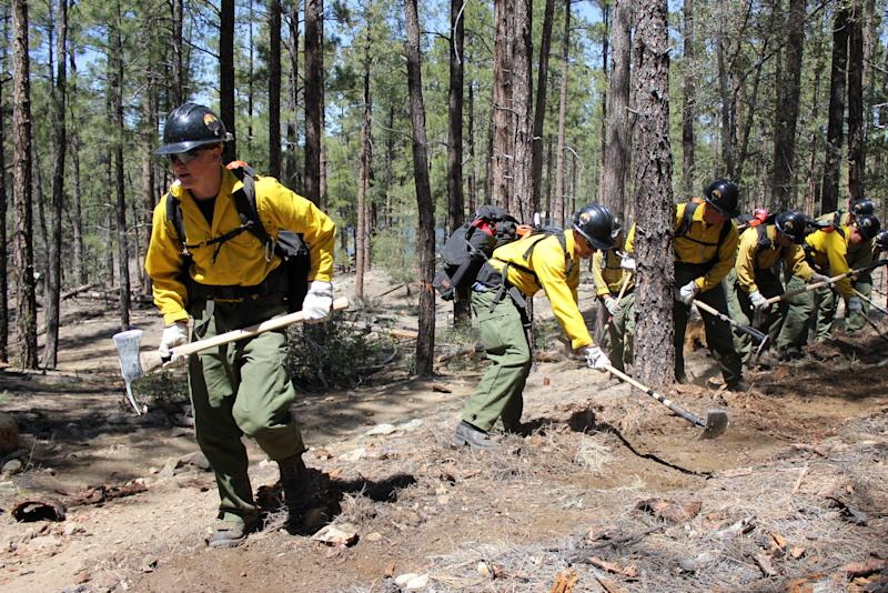 In this 2012 photo provided by the Cronkite News, the Granite Mountain Hotshot crew clears a fire line through the forest. On Sunday, June 30, 2013, 19 members of the Prescott, Ariz.-based crew were killed in the deadliest wildfire involving firefighters in the U.S. for at least 30 years. The firefighters were forced to deploy their emergency fire shelters - tent-like structures meant to shield firefighters from flames and heat - when they were caught near the central Arizona town of Yarnell, according to a state forestry spokesman. (AP Photo/Cronkite News, Connor Radnovich)