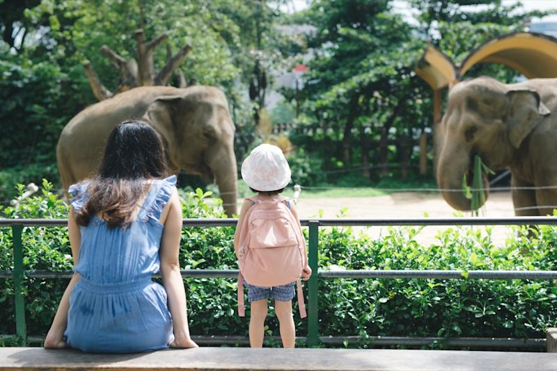 Happy mother and daughter watching elephants in zoo.