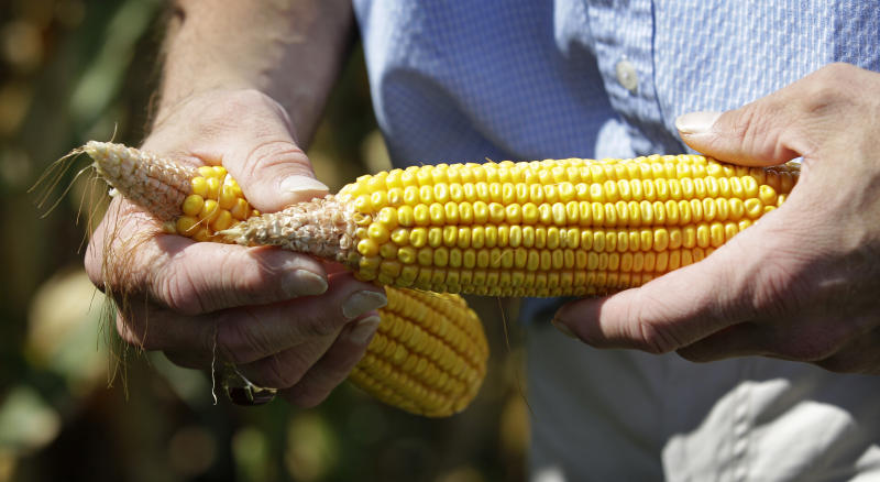 Farmer Tom Albaugh holds drought impacted ears of corn in a field on his farm, Monday, Aug. 20, 2012, in Ankeny, Iowa. Albaugh expects to be harvesting by the middle of September, ahead of the usual end of September or early October schedule. The harvest is three to four weeks ahead of schedule in most of the corn belt because an unusually warm spring allowed farmers to plant earlier. (AP Photo/Charlie Neibergall)