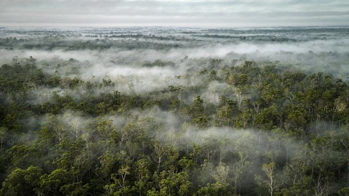 Papua is home to the largest rainforests in Indonesia