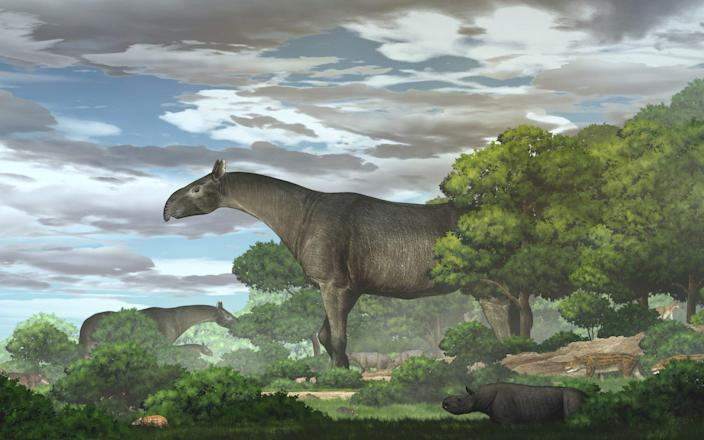 An artist's impression of the newly discovered extinct giant rhino species Paraceratherium linxiaense - REUTERS