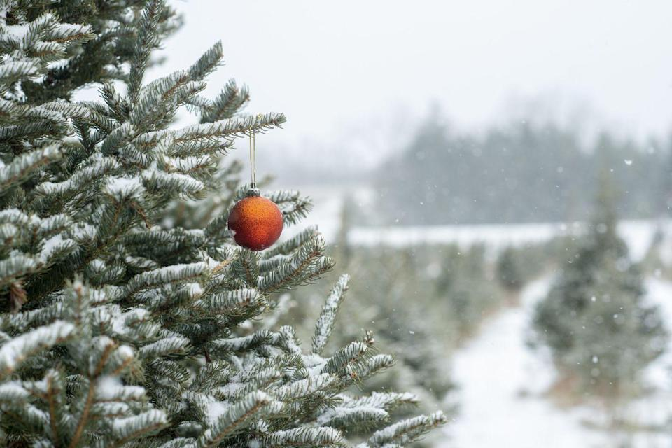 """<p><strong>Harrison, Idaho</strong></p><p>Gather your entire family for the ultimate photo opp at<strong> <a href=""""http://www.rustygatetreefarm.com/christmas-trees.html"""" rel=""""nofollow noopener"""" target=""""_blank"""" data-ylk=""""slk:Rusty Gate Tree Farm"""" class=""""link rapid-noclick-resp"""">Rusty Gate Tree Farm</a></strong>. Bundle up and spend your day walking through this magical spot in Idaho. It's also named after the family's beloved Labrador retriever, which we think is downright adorable. <br></p>"""