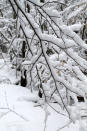 Snow accumulates on branches at Wompatuck State Park, in Hingham, Mass., on Saturday, Feb. 20, 2021. The winter storms that have wreaked havoc in large swaths of the country recently can also damage trees and shrubs. (Erin Minichiello via AP)