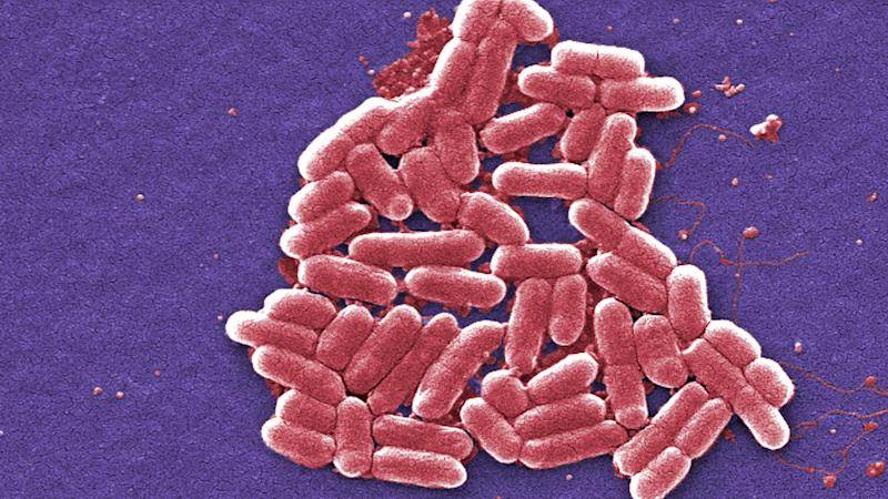 <p>Scientists have been surprised by the strength and structural role of the membrane surrounding many types of bacteria.</p>
