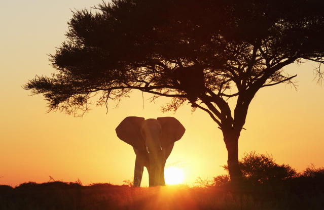 Silhouetted African elephant at sunset, Etosha National Park, Namibia. (Photo: Getty Images)