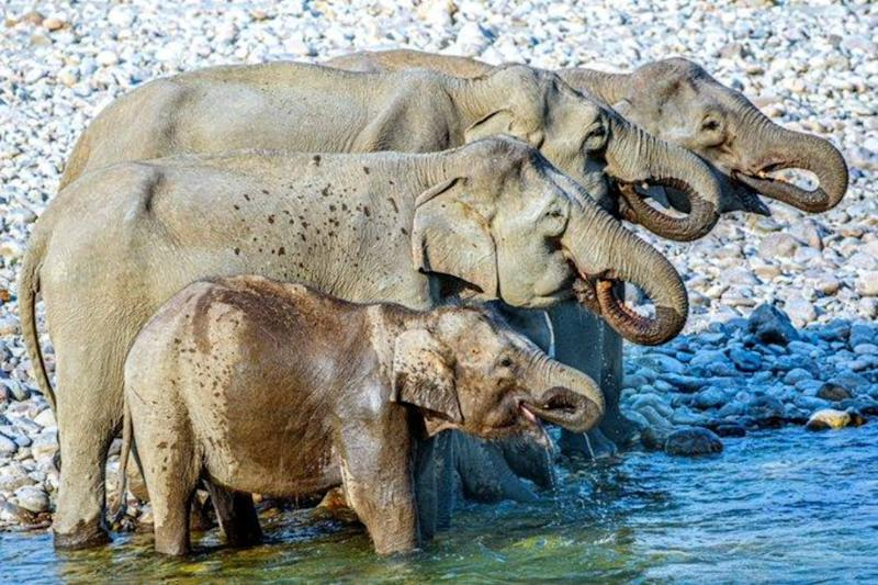 How Many Elephants Can You Spot in This Perfect Shot? Viral Photo Has Twitter Baffled