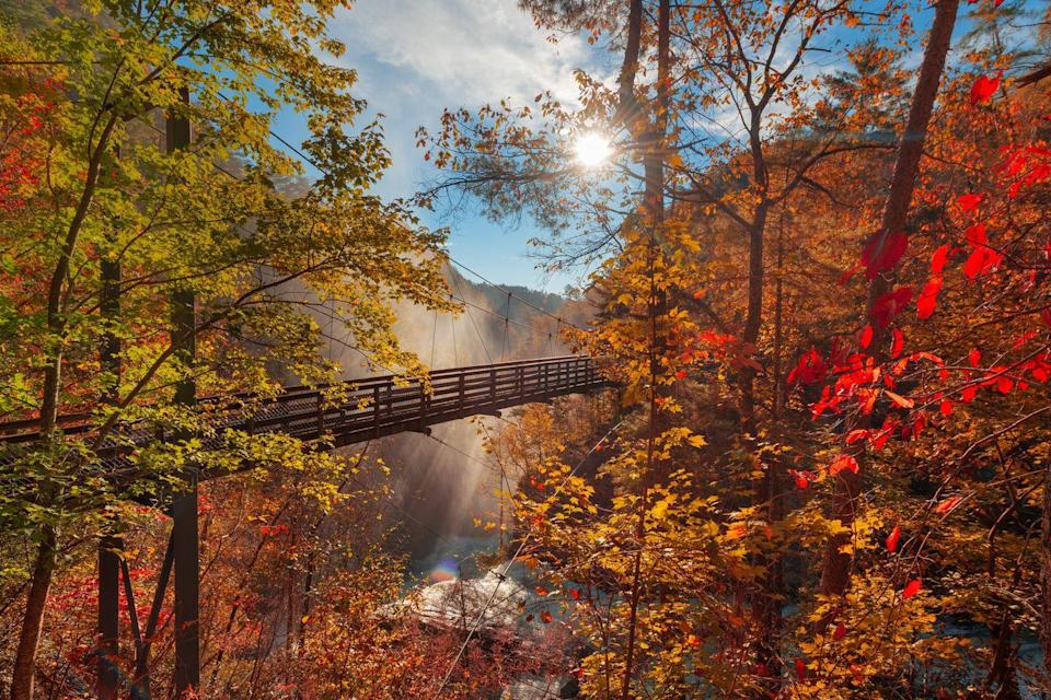 """<p>Visit one of the Southeast's most popular canyons, where you can hike on trails overlooking breathtaking waterfalls and surrounded by glimmering yellow oaks and red-tinted maple trees.</p><p><a class=""""link rapid-noclick-resp"""" href=""""https://go.redirectingat.com?id=74968X1596630&url=https%3A%2F%2Fwww.tripadvisor.com%2FHotels-g35300-Tallulah_Falls_Rabun_County_Georgia-Hotels.html&sref=https%3A%2F%2Fwww.thepioneerwoman.com%2Fhome-lifestyle%2Fg36804013%2Fbest-places-to-see-fall-foliage%2F"""" rel=""""nofollow noopener"""" target=""""_blank"""" data-ylk=""""slk:FIND A HOTEL"""">FIND A HOTEL</a></p>"""