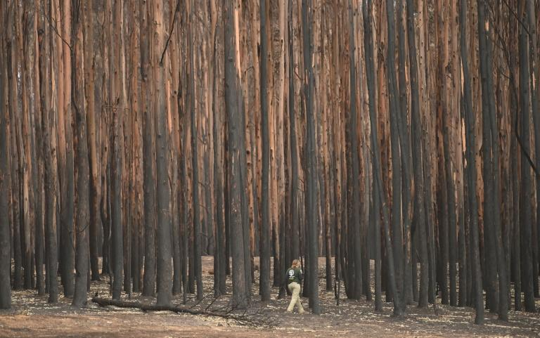 The bushfires in Australia this year have killed a billion animals by some estimates (AFP Photo/PETER PARKS)