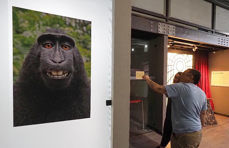 The viral selfie taken by a macaque monkey using the smart phone of nature photographer David J. Slater and which became the subject of a complicated copyright lawsuit is displayed at the Museum of Selfies, in Glendale, California, on March 29, 2018