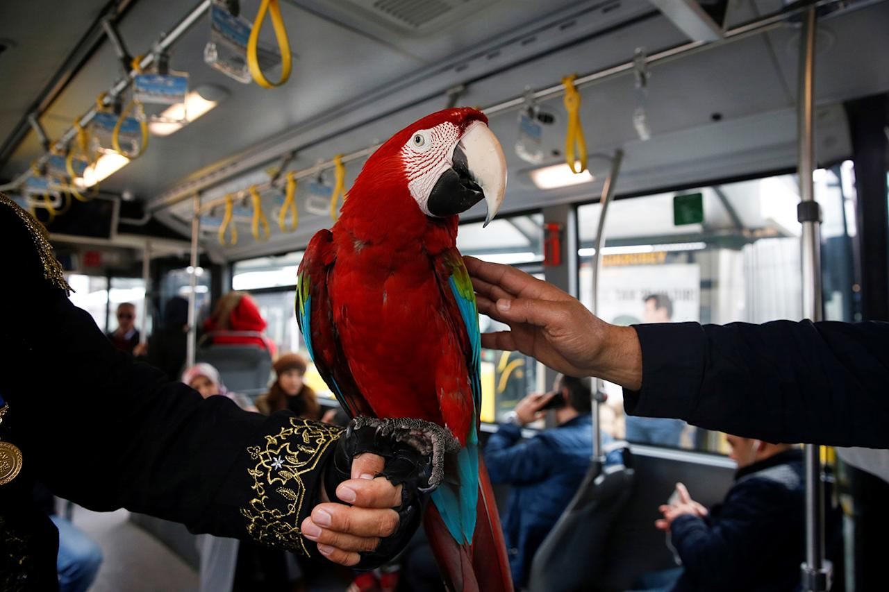 <p>Pasha gets some love on the bus in Istanbul, Turkey on March 7, 2017. (Photo: Elif Ozturk/Anadolu Agency/Getty Images) </p>
