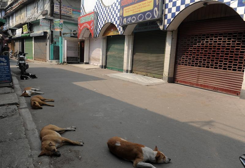 Stray dogs sleep on an empty road during a one day general strike called by the trade unions in Siliguri on February 28, 2012