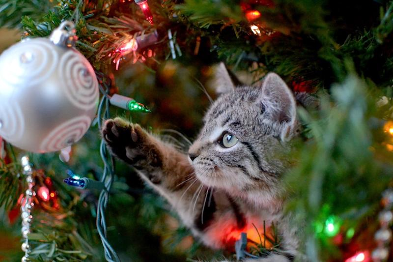 cat pawing at a christmas ornament why do cats hate christmas trees