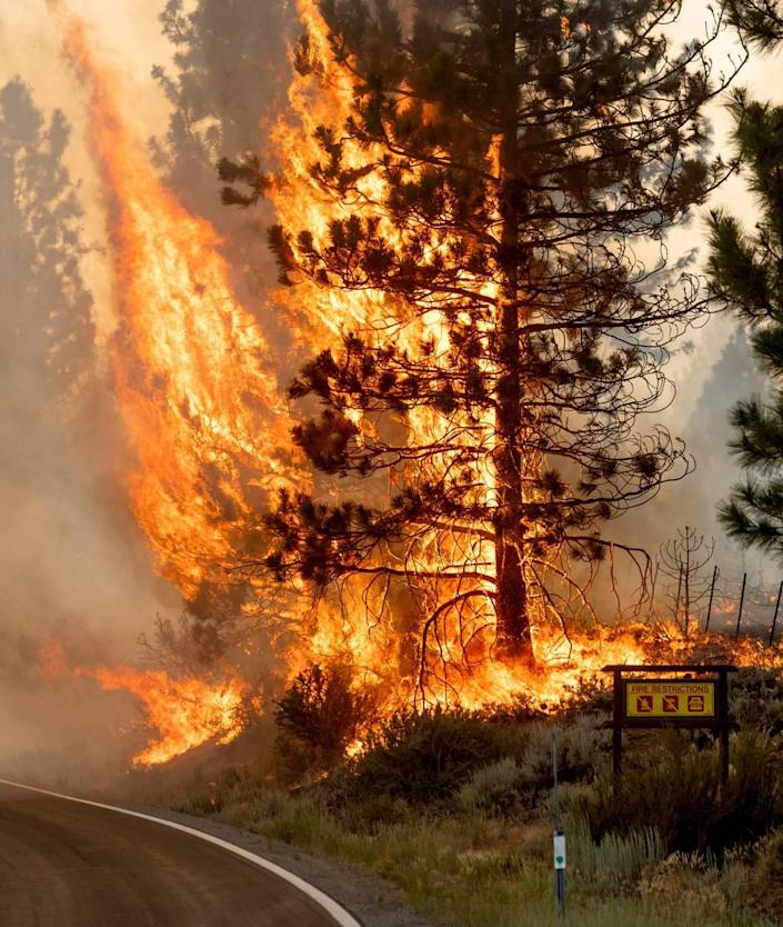The Sugar Fire, part of the Beckwourth Complex Fire, burns in Plumas National Forest, Calif., on Friday, July 9, 2021. (AP Photo/Noah Berger)