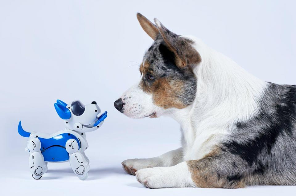 """<span class=""""caption"""">Robot pets can be useful, but won't replace the love and companionship of a living animal.</span> <span class=""""attribution""""><span class=""""source"""">(Shutterstock)</span></span>"""