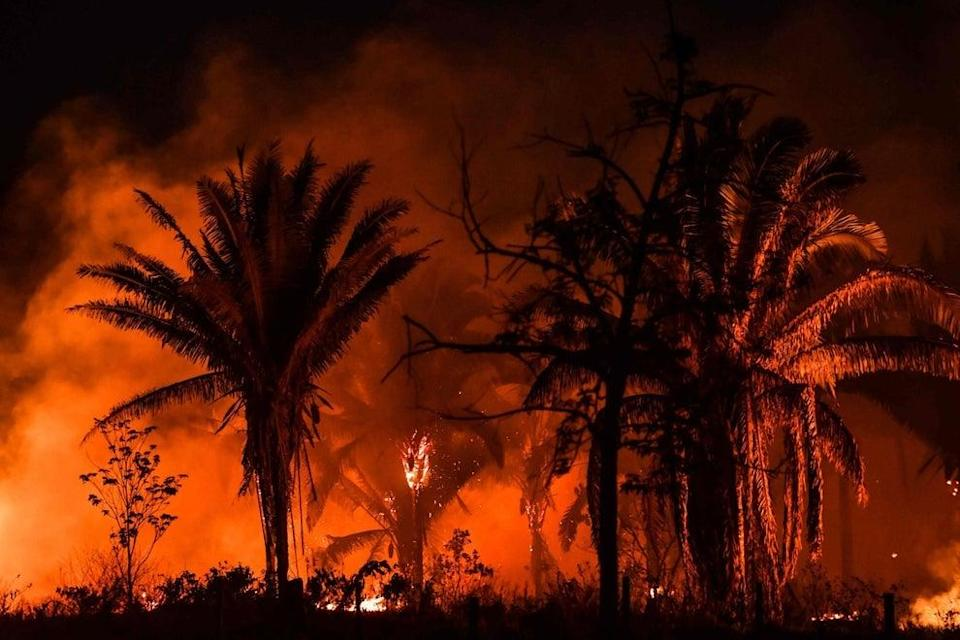 <p>Huge tracts of the Amazon rainforest are being burned by loggers and farmers, exacerbating losses from climate change</p> (NELSON ALMEIDA/AFP via Getty Images)