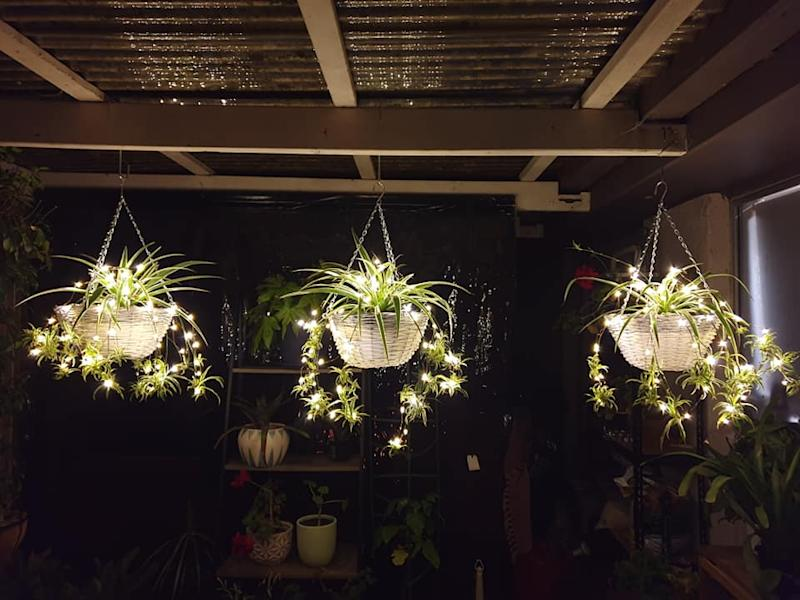 Kmart lights with outdoor plants