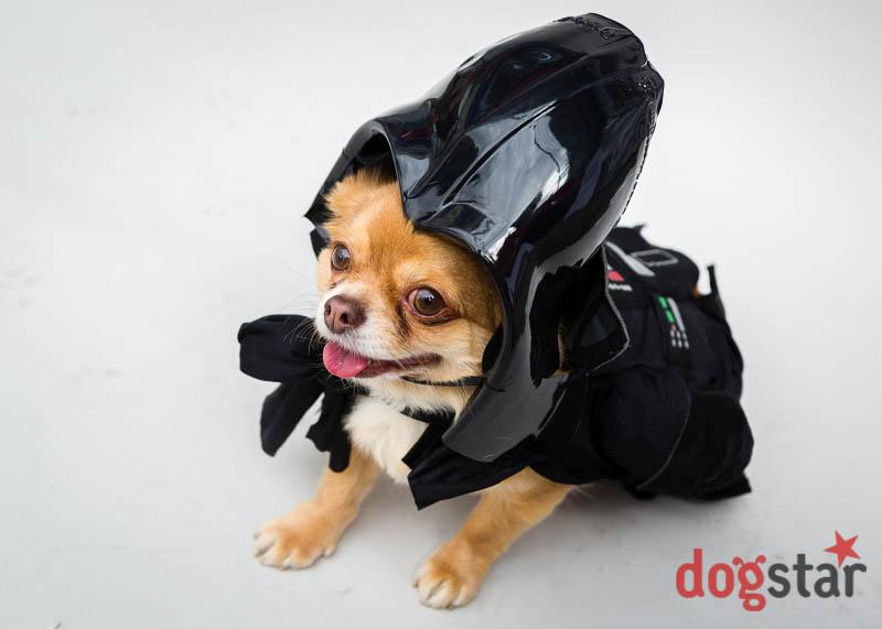 <p>The best dressed dogs will win a bag of goodies, courtesy of Hounds of Bow, and a framed print of their photo (Sci-Fi London) </p>