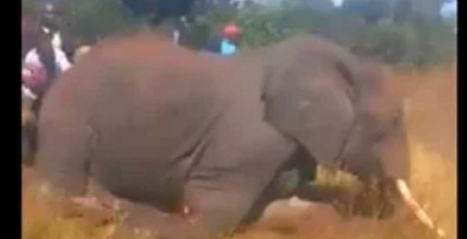 The elephant was hacked to death by villagers in Kenya (Picture: Twitter)