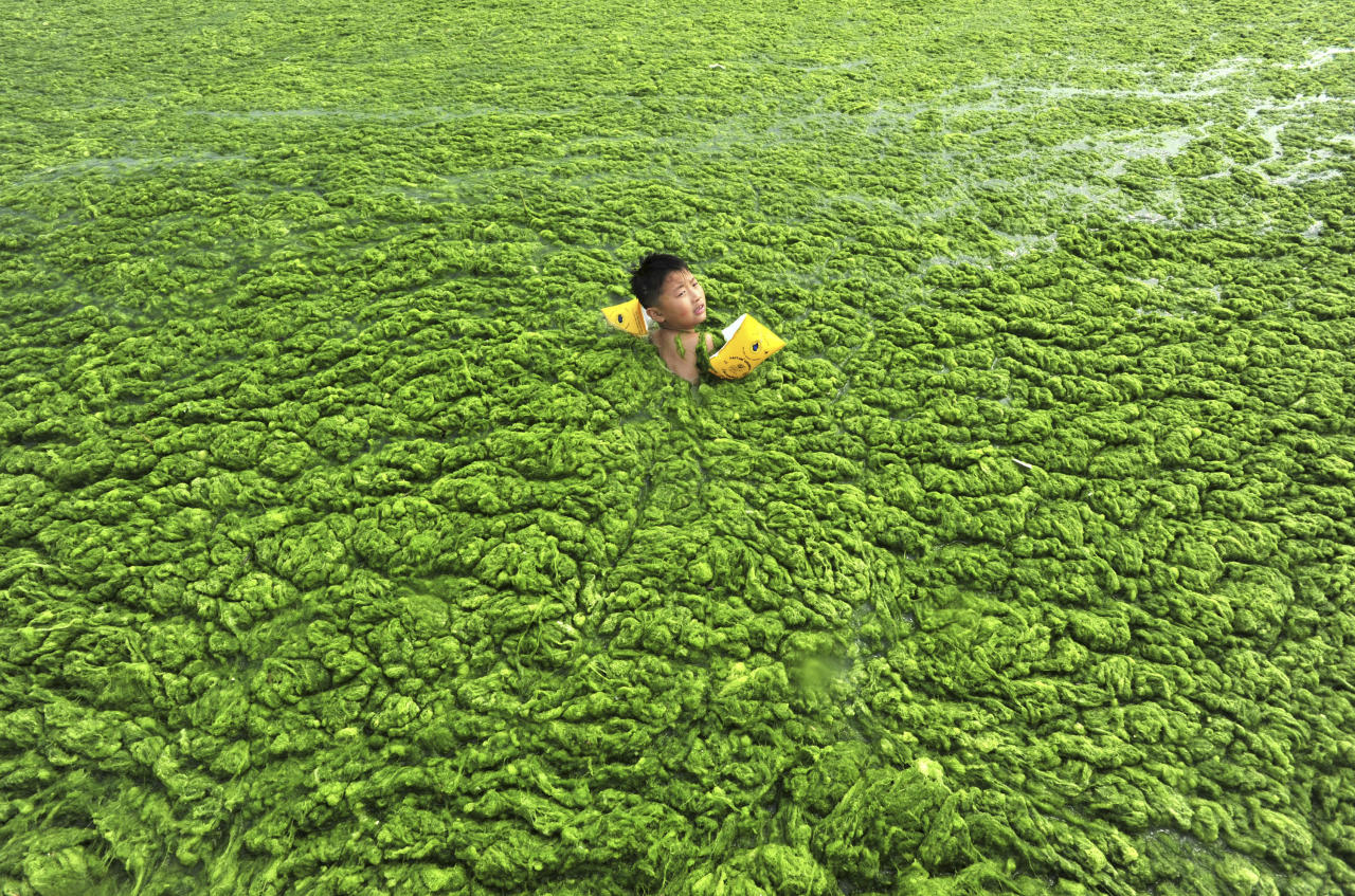 A boy swims in the algae-filled coastline of Qingdao, Shandong province July 15, 2011. Picture taken July 15, 2011. REUTERS/China Daily