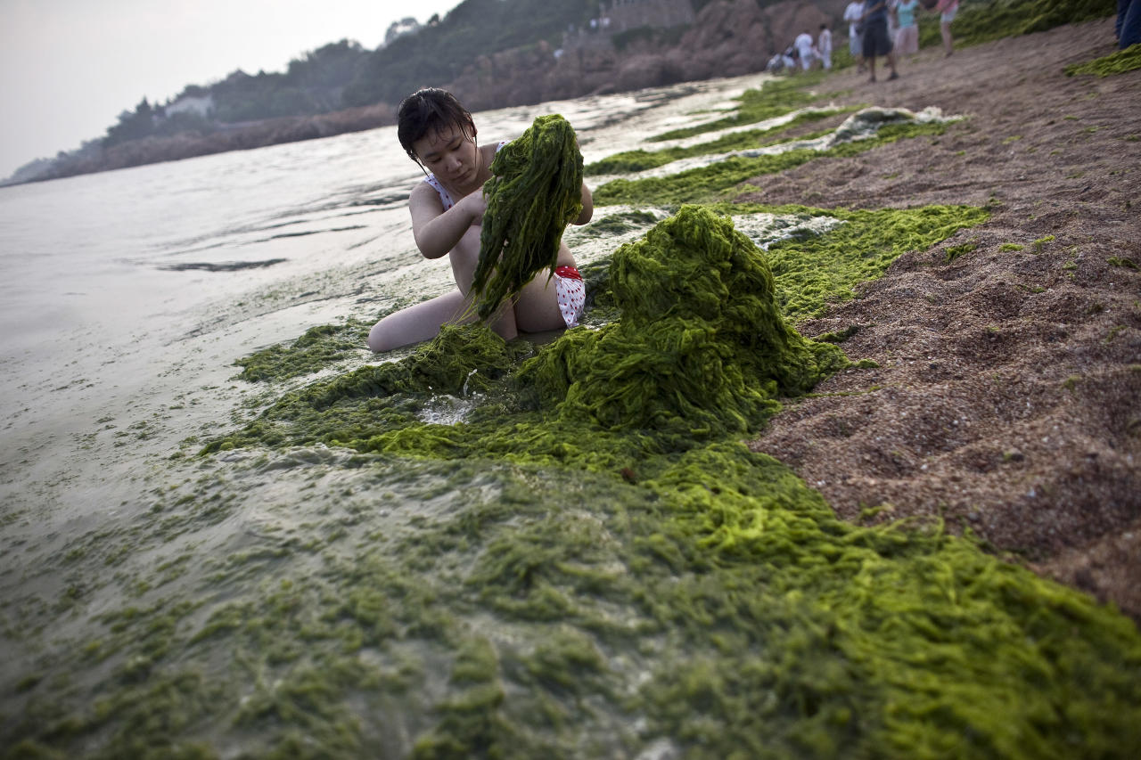A woman clears away algae from a beach in Qingdao, Shandong province July 7, 2008. Thousands of Chinese troops and volunteers should clear unsightly algae from competition areas at the Qingdao Olympic sailing venue by Thursday, an official said.  REUTERS/Nir Elias