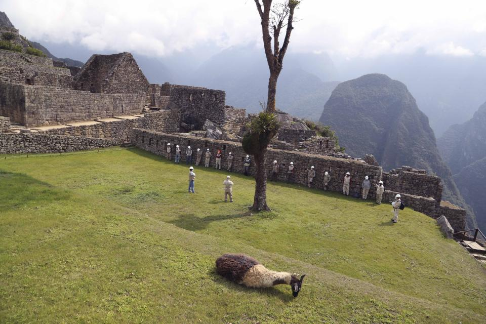A lama lays on the grass at the Machu Picchu archeological site, where only maintenance workers gather while it's closed to the public amid the COVID-19 pandemic, in the department of Cusco, Peru, Tuesday, Oct. 27, 2020. The world-renown Incan citadel of Machu Picchu will reopen on Nov. 1. (AP Photo/Martin Mejia)