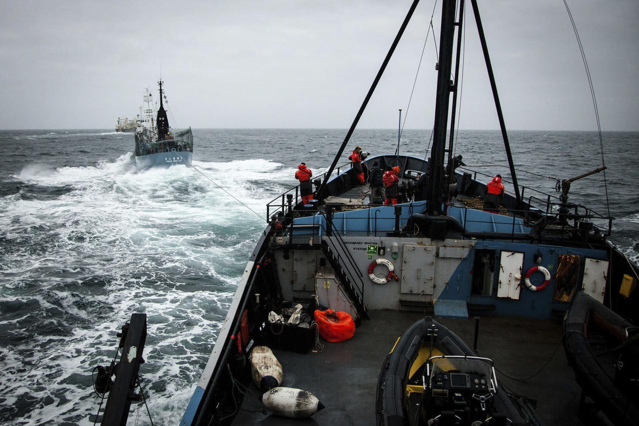 Japanese whaling ship Yushin Maru drags a cable into the ocean in an attempt to stop the propellers of the Sea Shepherd ship, the 'Steve Irwin', (foreground) in the Southern Ocean, February 2, 2014, in this handout image taken by the Sea Shepherd Australia Antarctic Whale Defense Campaign. REUTERS/Eliza Muirhead/Sea Shepherd Australia/Handout via Reuters (ANTARCTICA - Tags: CIVIL UNREST ENVIRONMENT MARITIME) ATTENTION EDITORS � THIS IMAGE WAS PROVIDED BY A THIRD PARTY. NO SALES. NO ARCHIVES. FOR EDITORIAL USE ONLY. NOT FOR SALE FOR MARKETING OR ADVERTISING CAMPAIGNS. THIS PICTURE IS DISTRIBUTED EXACTLY AS RECEIVED BY REUTERS, AS A SERVICE TO CLIENTS