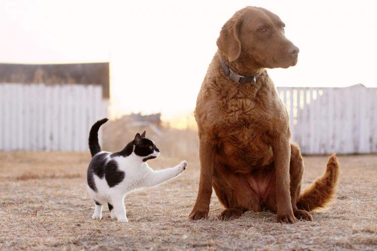 Cat and Chesapeake Bay Retriever dog sitting together. (Photo: Getty Images)