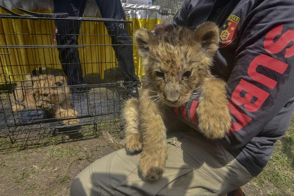 Illegal wildlife trafficking is widespread in Southeast Asia (AFP via Getty Images)