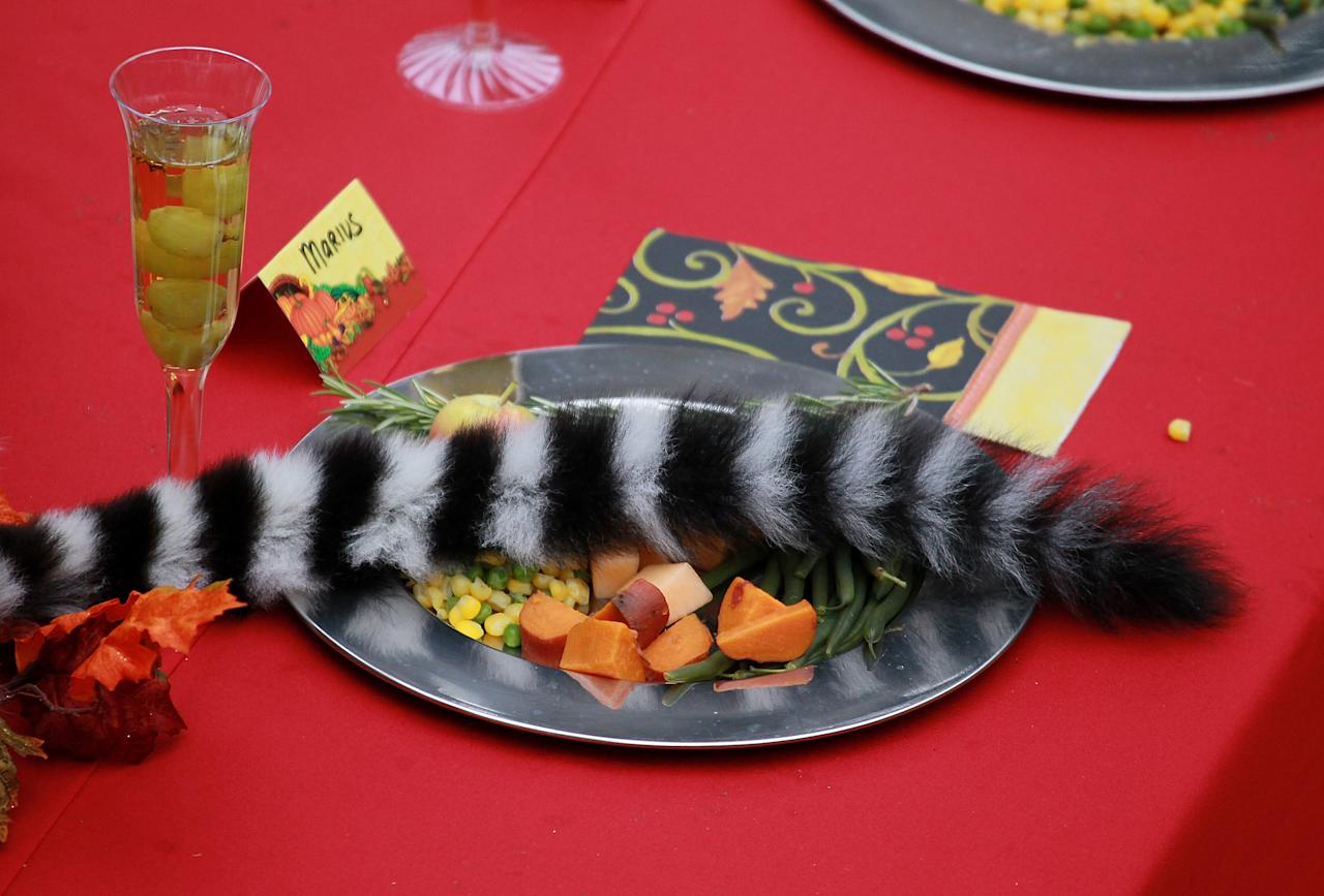 SAN FRANCISCO, CA - NOVEMBER 23:  The tail of a Ring Tailed Lemur lays across a plate of food that is part of a Thanksgiving spread at the San Francisco Zoo on November 23, 2011 in San Francisco, California. Fifteen lemurs at the San Francisco Zoo were treated to a Thanksgiving feast of green beans, a fruit salad made up of apples, bananas, grapes sweet potatoes and a turkey made out of monkey chow.  (Photo by Justin Sullivan/Getty Images)