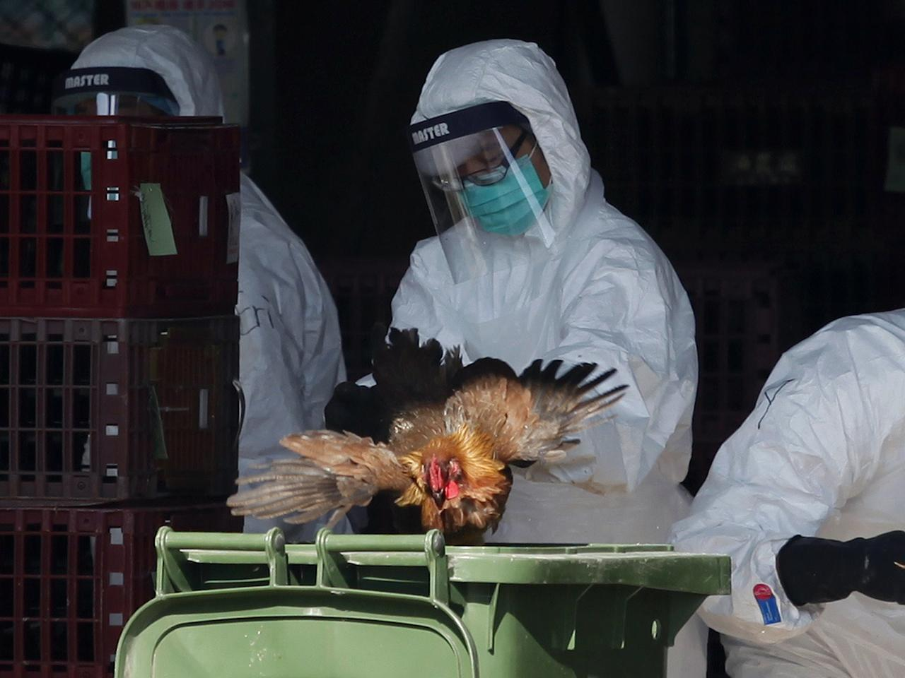 Scientists create 'mutant bird flu' to prepare for possibility of deadly global pandemic