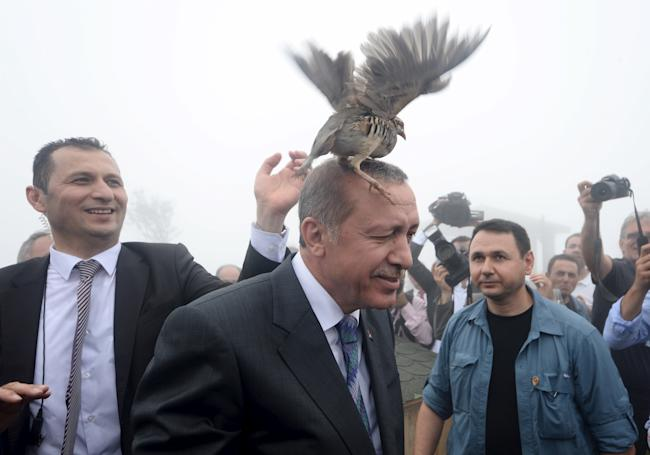erdogan bird turkey