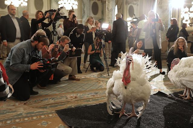 "<p>Drumstick and Wishbone, the National Thanksgiving Turkey and its alternate ""wingman,"" are introduced during an event hosted by The National Turkey Federation at the Williard InterContinental, Nov. 20, 2017 in Washington. (Photo: Chip Somodevilla/Getty Images) </p>"