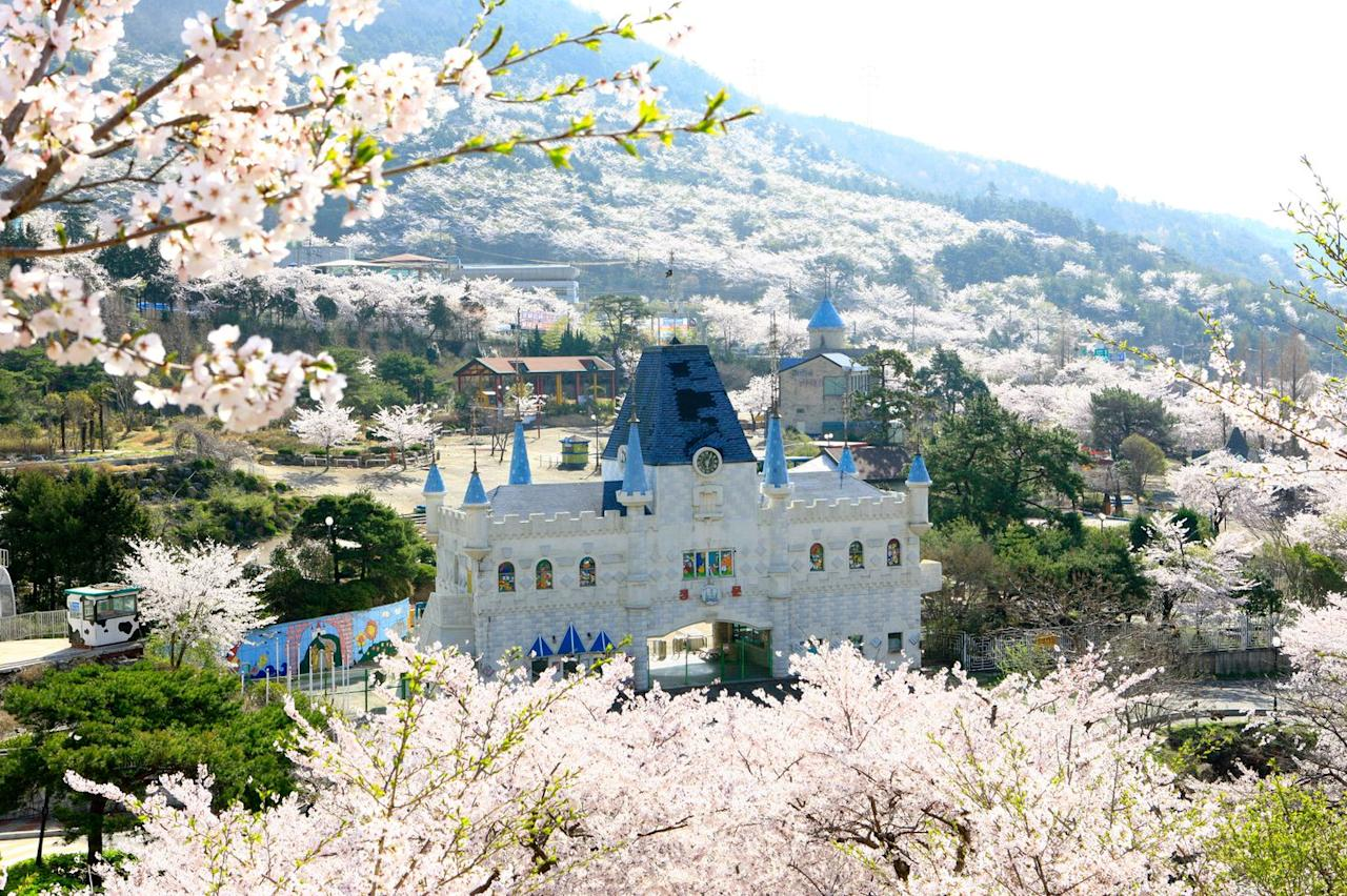 "<p><em>April 1 to 10</em></p><p>There are photo opps everywhere you turn in this charming naval town with 300,000 cherry blossom trees. But perhaps the most Instagram-worthy shot is at Gyeonghwa train station, where rows of trees run parallel to the track and cherry blossoms rain down <a href=""https://www.womansday.com/life/travel-tips/g3203/best-scenic-train-rides-around-the-world/"" target=""_blank"">on the train</a> as it pulls in. During the<a href=""http://english.visitkorea.or.kr/enu/ATR/SI_EN_3_6.jsp?cid=1630721"" target=""_blank""> Jinhae Gunhangje Festival</a>, major events include a fireworks show, an air show by the flight display team of the Republic of Korea Airforce and a nighttime light show. </p>"