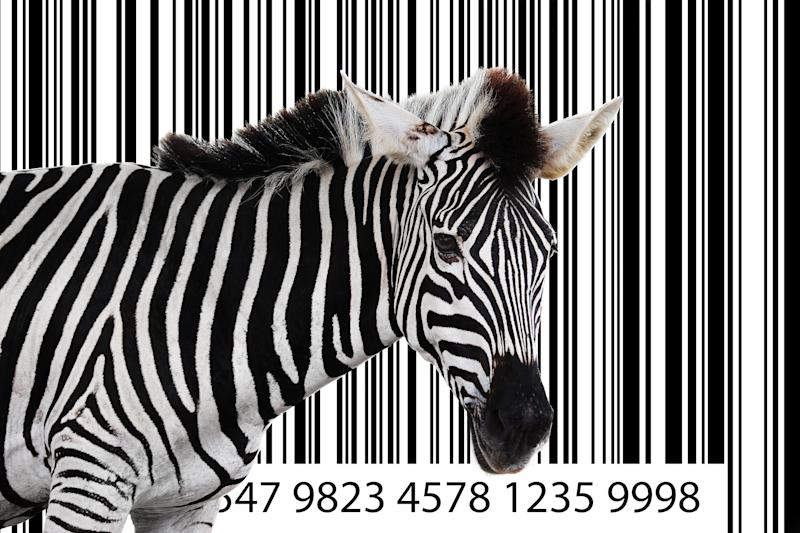 Zebra standing in front of a large bar code