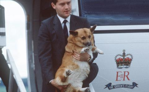 Along for the ride, spotted at Aberdeen Airport in 1986 - Credit: Getty